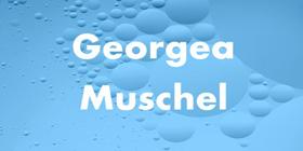 Muschel-Georgea-2020