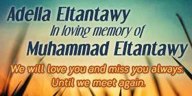 Eltantawy2015