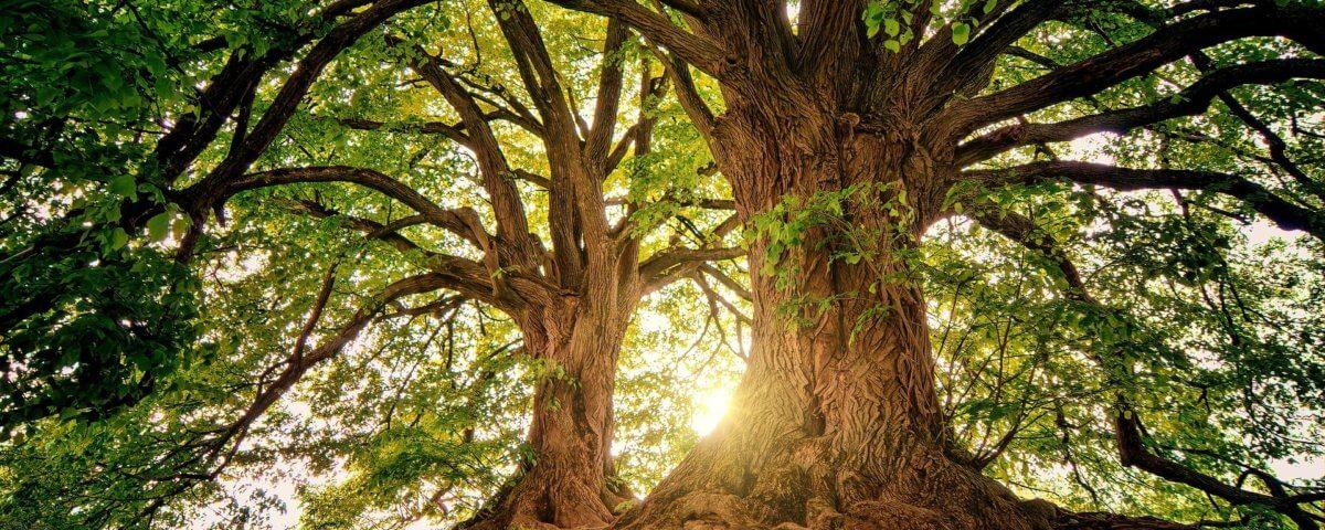 when-great-tree-falls